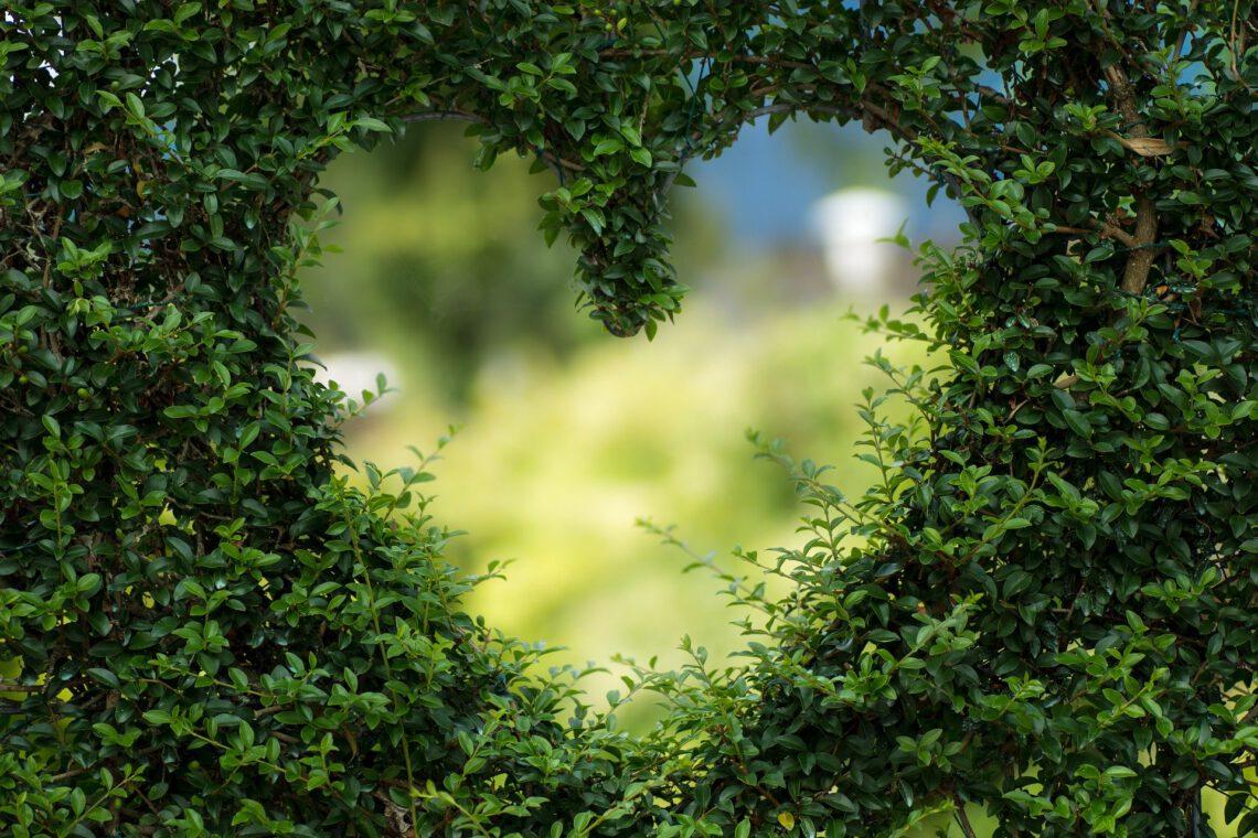 Hecke die in Form eines Herzens gewachsen ist
